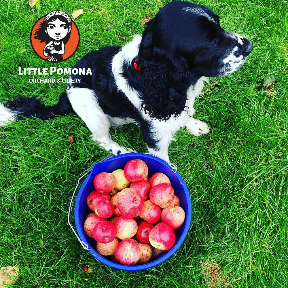 Little Pomona Orchard & Cidery